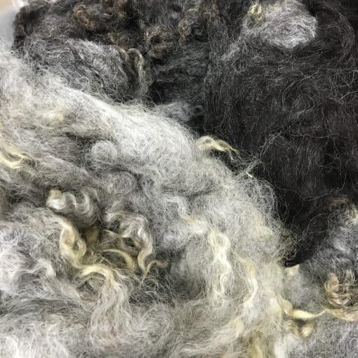East Friesian x Suffolk x Linocln Crossbred Fleece